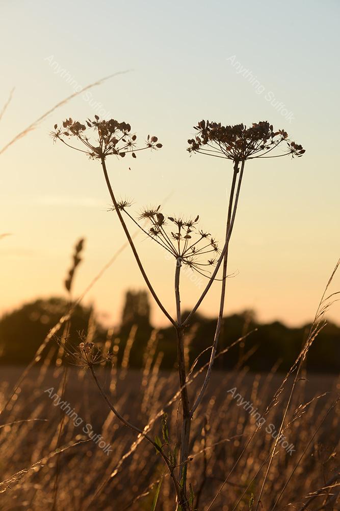 Gislingham landscape by Joanna Walker