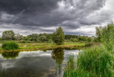 Lackford Lakes by Frank Hendre