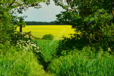 Suffolk Landscape by Steve Thomson