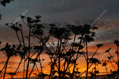 Old Newton Sunset by Phil Stearn