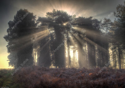 Trees in Rushford by Frank Hendre