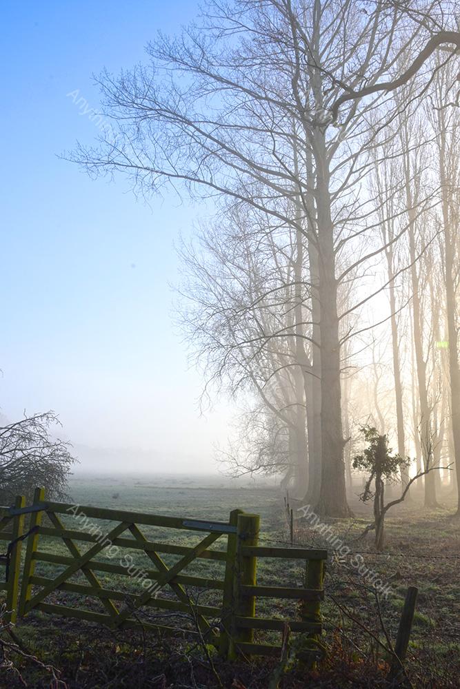 Misty Suffolk woodland gate by James Ellis