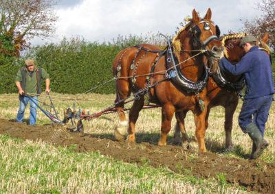 Bucklesham Plough Day by Deborah Soer