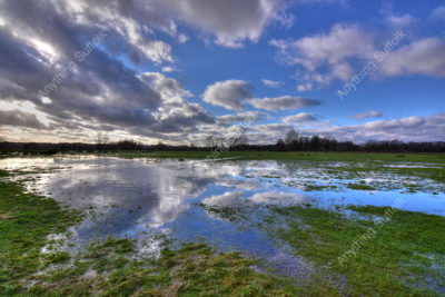 The Water Meadows, Sudbury by Steve Thomson