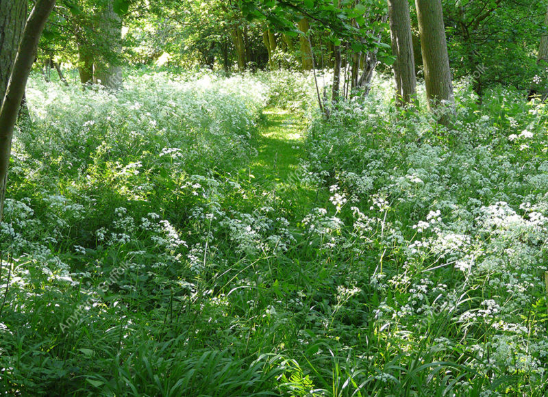 Woodland at Lawshall near Bury St Edmunds by Jean Kerby