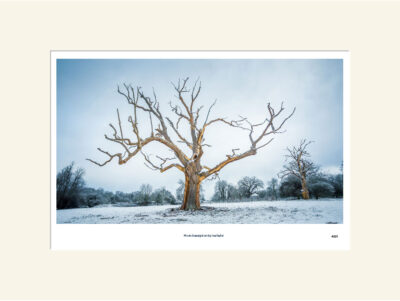 Tree in snow at Culford